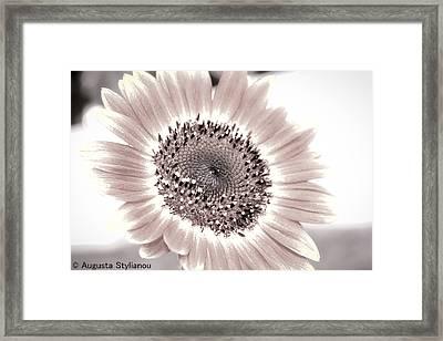 White Flower Framed Print by Augusta Stylianou