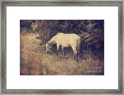White Horse Framed Print by Jelena Jovanovic