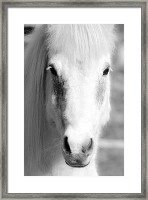 White Horse  Framed Print by Tommytechno Sweden
