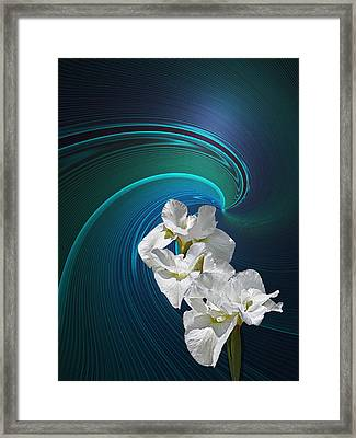Framed Print featuring the photograph White Iris by Judy  Johnson