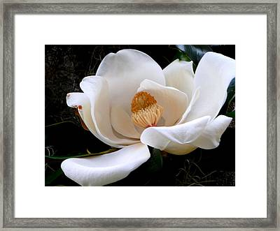 Framed Print featuring the photograph White Magnolia by Yolanda Rodriguez