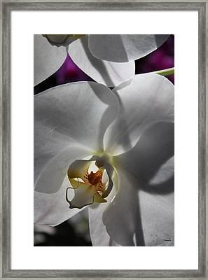 White Orchid Four Framed Print by Mark Steven Burhart