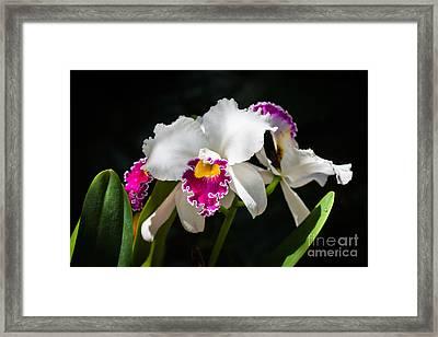 White Orchid Framed Print by Juan  Silva