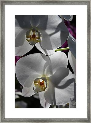 White Orchid Two Framed Print by Mark Steven Burhart