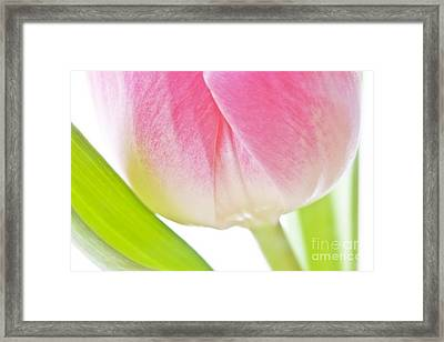 White Pink Green Floral Abstract Art Work Photograph Framed Print by Artecco Fine Art Photography