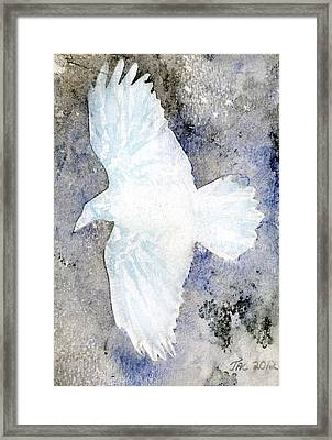White Raven Framed Print