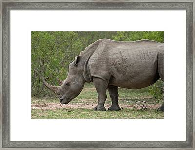 White Rhino Framed Print by Bob Gibbons