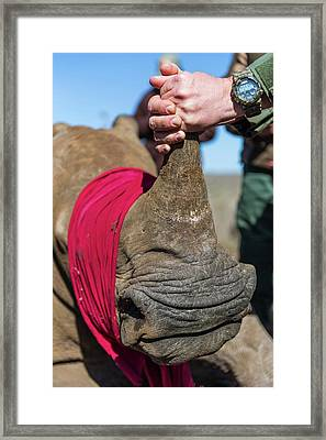 White Rhino Conservation Operation Framed Print