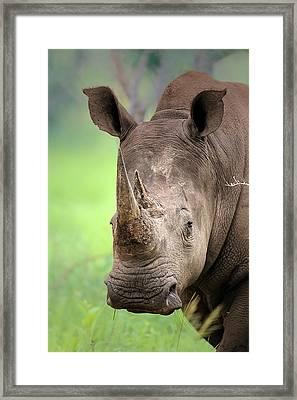 White Rhinoceros Framed Print by Johan Swanepoel