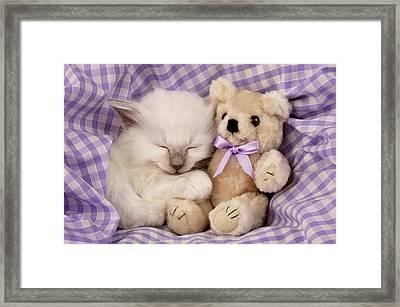 White Sleeping Cat Framed Print by Greg Cuddiford