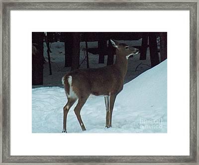 White Tail Deer Framed Print by Brenda Brown