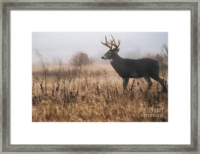 Whitetail Buck In Mist Framed Print