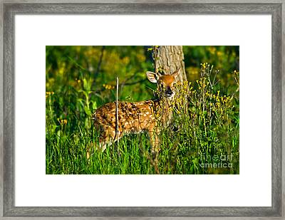 Whitetail Deer Fawn Framed Print by Mark Newman