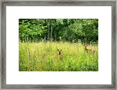 Whitetail Fawns Framed Print