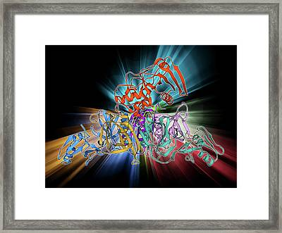 Whooping Cough Toxin Molecule Framed Print by Laguna Design