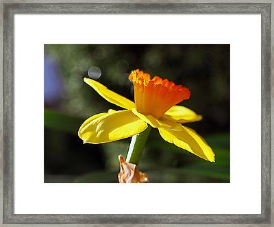 Framed Print featuring the photograph Wide Open by Joe Schofield