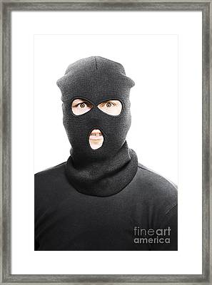Wild Eyed Masked Bandit Framed Print by Jorgo Photography - Wall Art Gallery