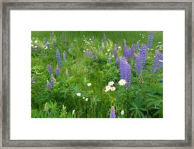Wild Flowers Framed Print by Andrea Galiffi
