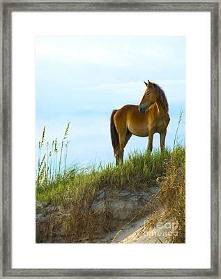 Wild Horse Framed Print by Diane Diederich