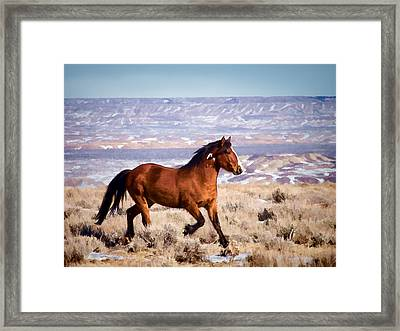 Eagle - Wild Horse Stallion Framed Print