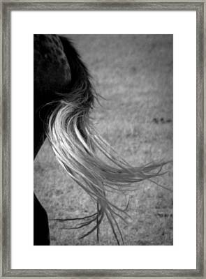 Wild Mustangs Of New Mexico 34 Framed Print