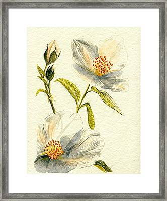 Wild Roses Framed Print by Donna Turbyfill