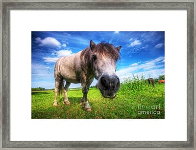 Wild Young Horse On The Field Framed Print by Michal Bednarek