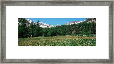 Wildflowers In A Field With Snowcapped Framed Print by Panoramic Images