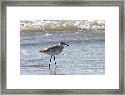 Willet Bird Wading In Ocean Surf Framed Print