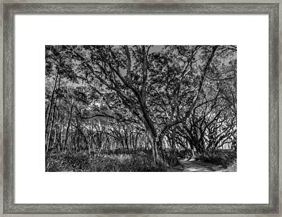Wind Swept Trees Framed Print