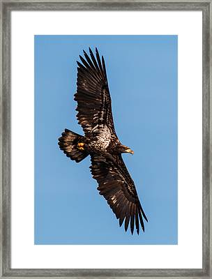 Wings Framed Print by Angie Vogel