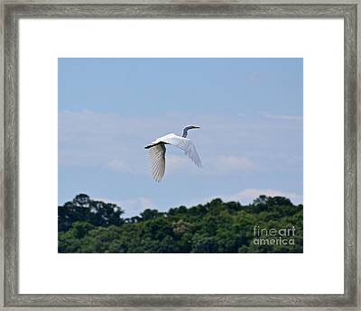 Framed Print featuring the photograph Wings II by Carol  Bradley