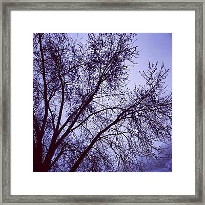 Winter Blues Framed Print