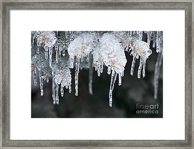 Winter Branches In Ice Framed Print by Elena Elisseeva
