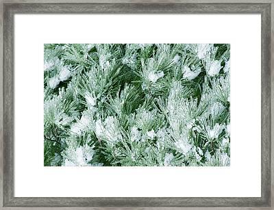 Winter Framed Print by Daniel Csoka