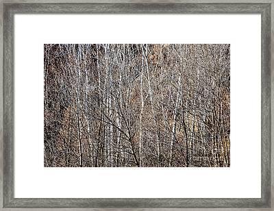 Winter Forest Framed Print by Elena Elisseeva