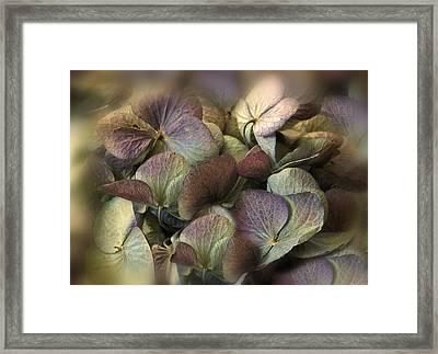 Winter Hydrangea Framed Print by Jessica Jenney