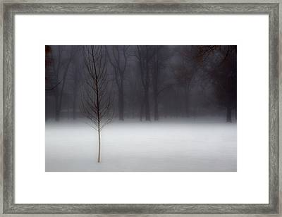 Winter In The Park Framed Print by Utah Images