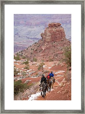 Winter Mule Train In The Grand Canyon Framed Print by Jim West