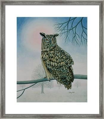 Winter Owl Framed Print