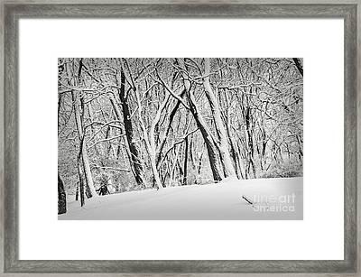 Winter Park Landscape Framed Print