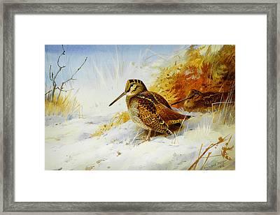 Winter Woodcock  Framed Print