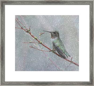 Wintering Hummingbird Framed Print