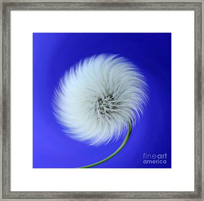 Wish In Blue Framed Print by Krissy Katsimbras