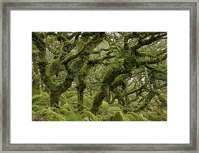 Wistman's Wood Framed Print by Bob Gibbons