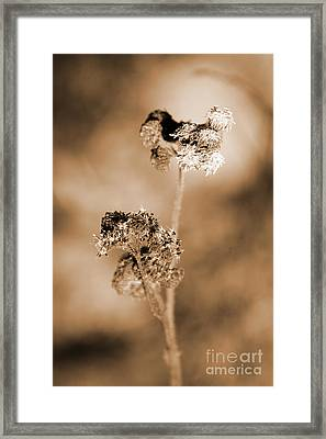 Withering Weed Framed Print