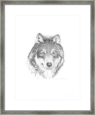 Wolf-1 Framed Print