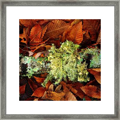 Wolf Moss Lichen Framed Print by Frank Winters