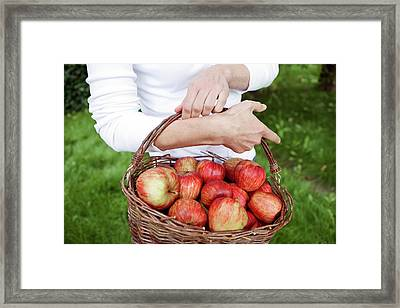 Woman Picking Apples Framed Print by Thomas Fredberg
