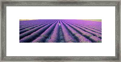 Woman Walking Through Fields Framed Print